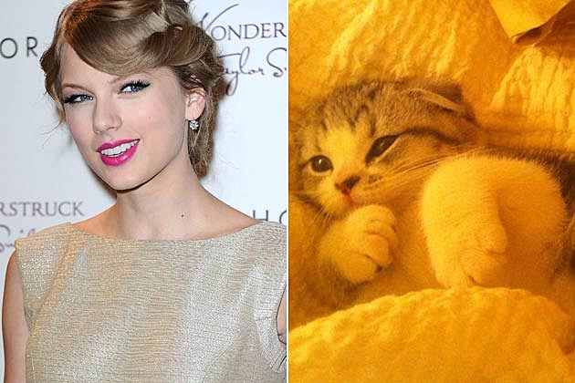 Taylor Swift Kitten
