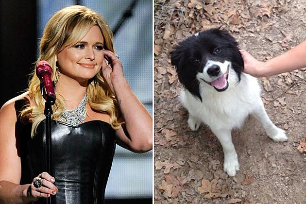 Miranda Lambert Dog