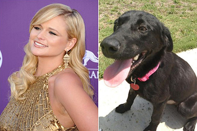 Miranda Lambert New Dog