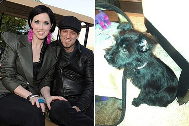 Thompson Square Puppy