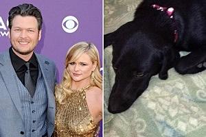 Blake Shelton Miranda Lambert Dog